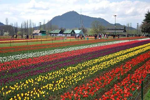This year, lighting system and other surprises at Tulip Garden - Countryside Kashmir